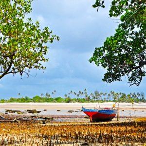 Mangroves - Swahili coast