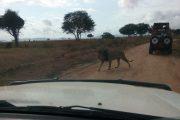Scouts on safari