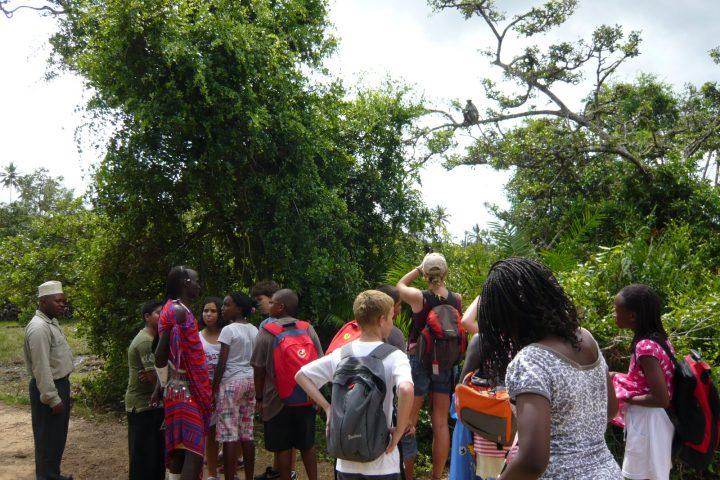 Zanzibar Red Colobus, School Trip