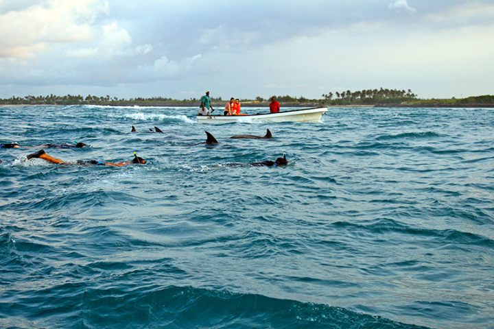 Dolphin Swimming Zanzibar