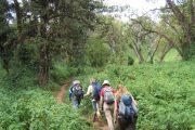Kilimanjaro Forest hiking