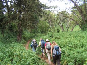 Kilimanjaro Forest hiking