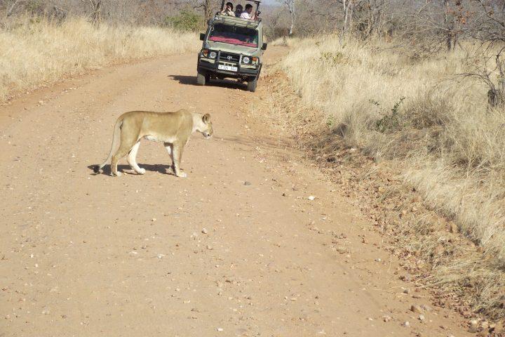 Game driving Ruaha National Park