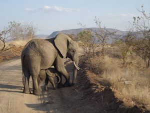 Elephant and Baby, Ruaha National Park