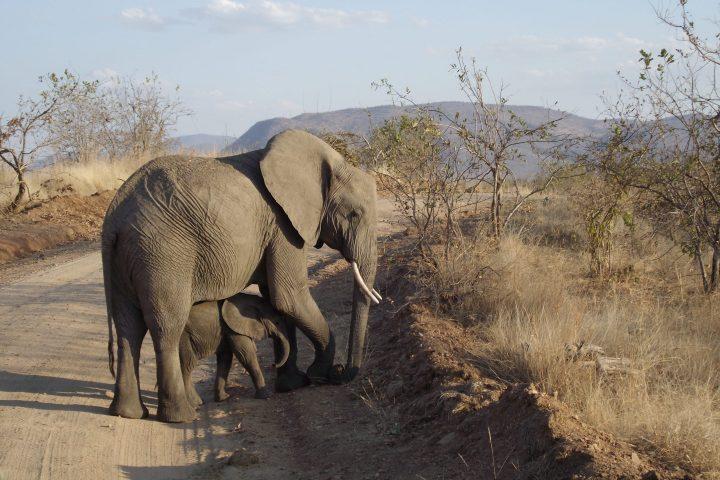 Elephant and Baby, Ruaha National Park