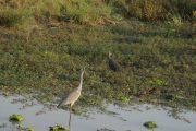 Birds In Mikumi National Park