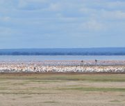 Birds on Lake Manyara