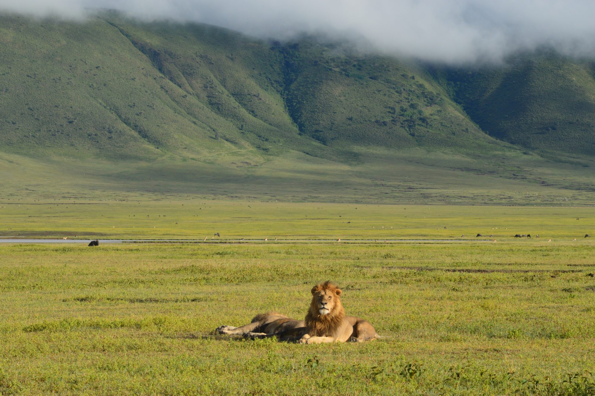 Lions below Ngorongoro Crater wall