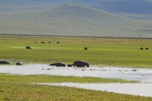 Hippo with baby Ngorongoro Crater