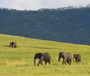 Elephants Ngorongoro Crater