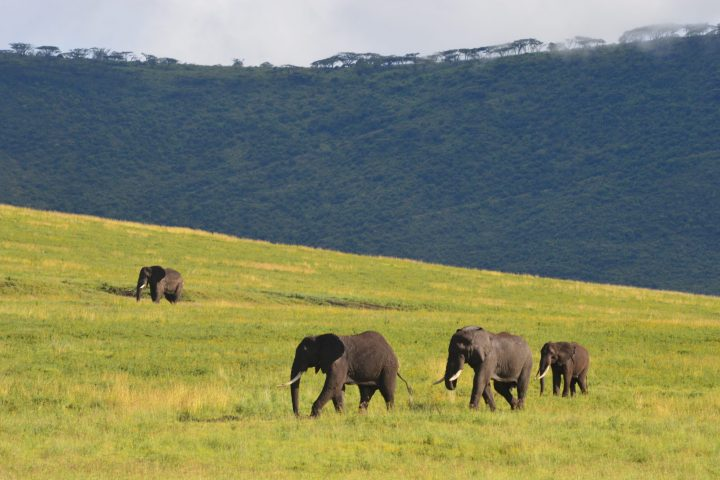 Elephants Ngorongoro Crater
