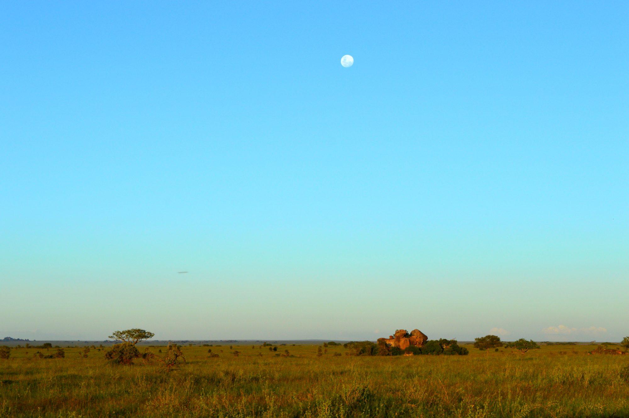 Serengeti Masai Kopjes