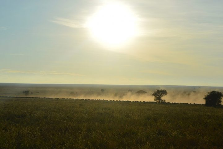 Serengeti Migration at Sunrise