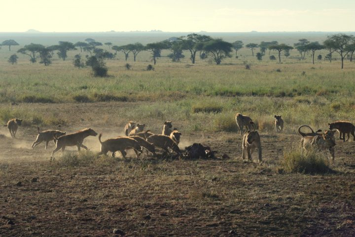 Leaving the Kill to the scavengers