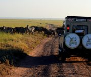 Safari Vehicle at migration crossing