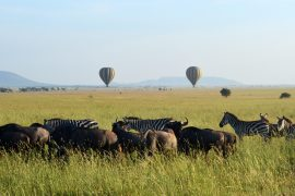 Balloons over the Migration