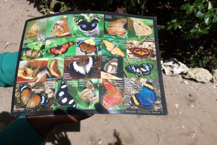 Zanzibar Butterflies