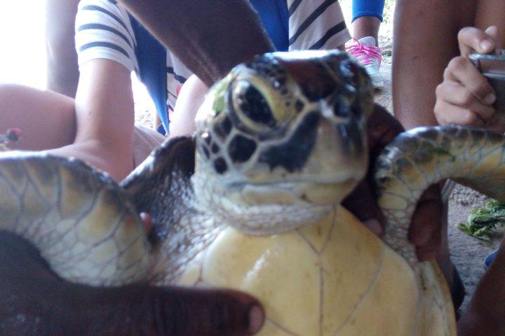 Zanzibar Turtle Sanctuary